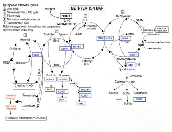 Methylation Map