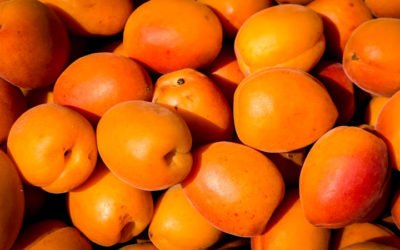 Apricot Kernels and Salvestrols | Inhibitors and Enhancing Supplements
