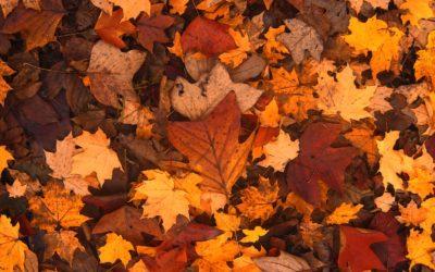 Rayid – Cycles and Seasons